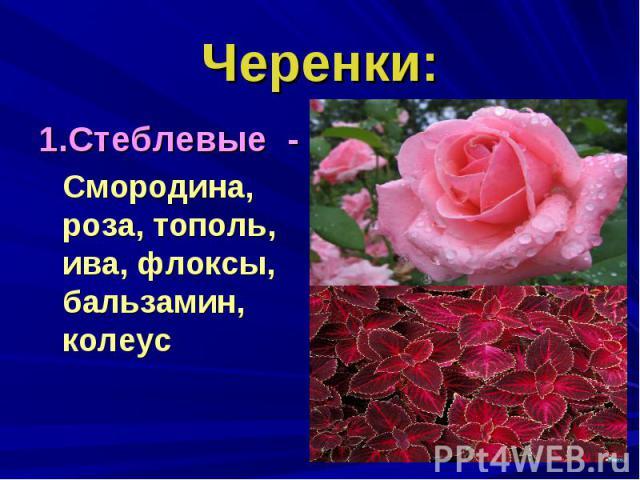 Черенки:1.Стеблевые - Смородина, роза, тополь, ива, флоксы, бальзамин, колеус