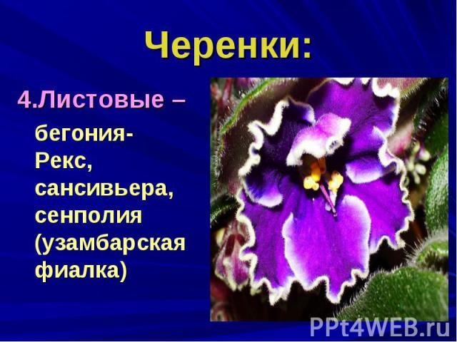 Черенки:4.Листовые – бегония-Рекс, сансивьера, сенполия (узамбарская фиалка)
