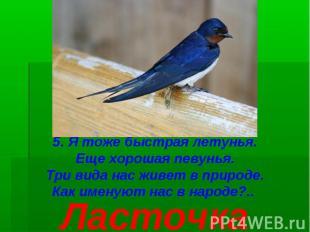 5. Я тоже быстрая летунья. Еще хорошая певунья. Три вида нас живет в природе. Ка