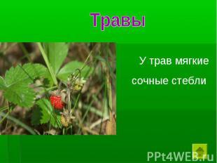 Травы У трав мягкие сочные стебли
