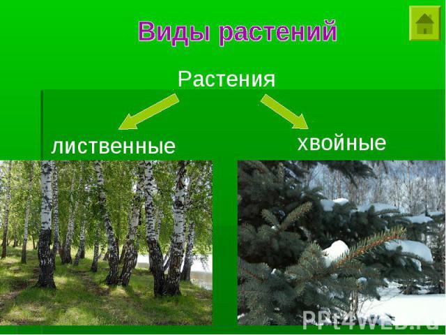 Виды растений Растения лиственные хвойные