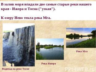 """В залив моря впадали две самые старые реки нашего края - Ижора и Тосна (""""узкая"""")"""