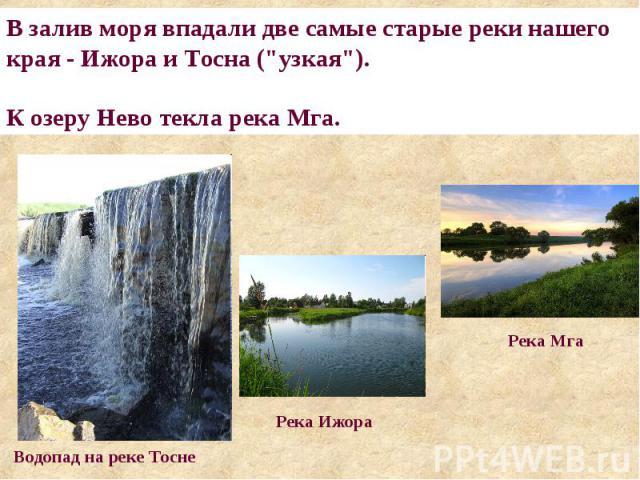 В залив моря впадали две самые старые реки нашего края - Ижора и Тосна (