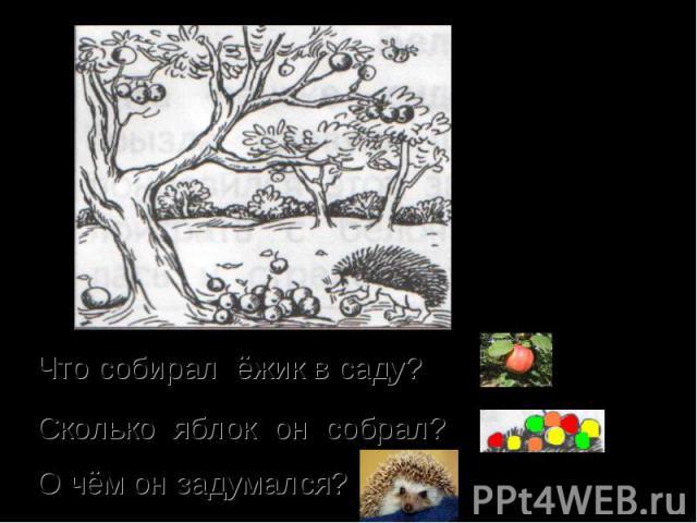 Что собирал ёжик в саду? Сколько яблок он собрал? О чём он задумался?