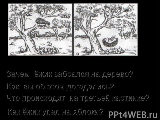 Зачем ёжик забрался на дерево? Как вы об этом догадались? Что происходит на третьей картинке? Как ёжик упал на яблоки?