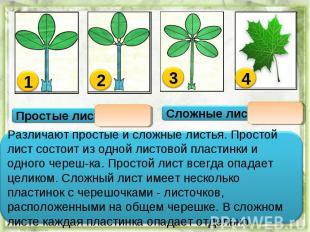 Различают простые и сложные листья. Простой лист состоит из одной листовой пласт