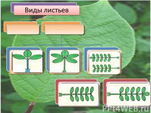 Виды листьев