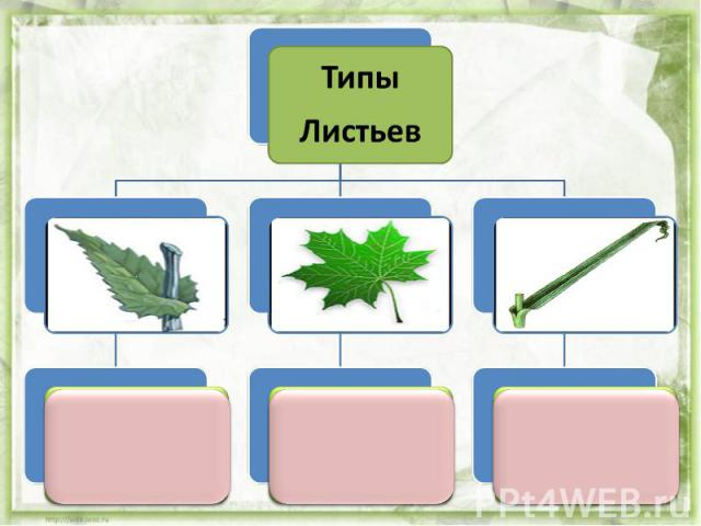 Типы Листьев