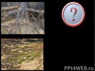 Какие преимущества и недостатки имеют растения с разными типами корневых систем?