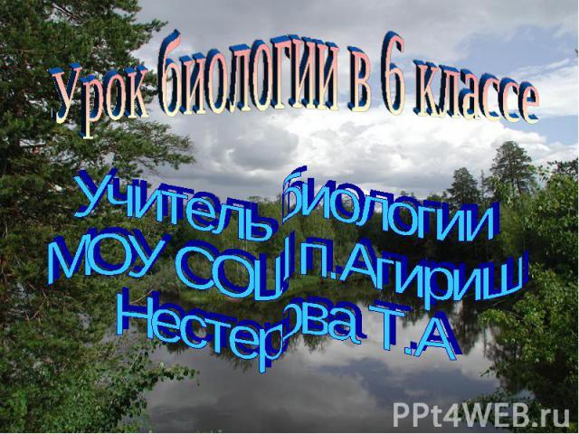Урок биологии в 6 классе Учитель биологии МОУ СОШ п.Агириш Нестерова Т.А
