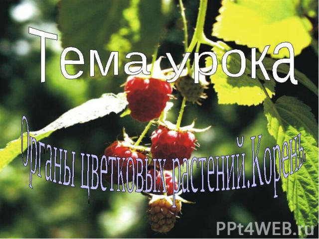 Тема урока Органы цветковых растений.Корень.