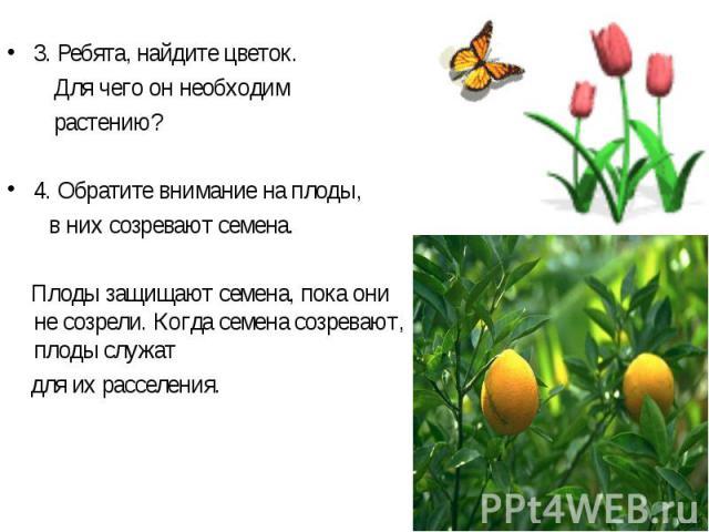 3. Ребята, найдите цветок. Для чего он необходим растению? 4. Обратите внимание на плоды, в них созревают семена. Плоды защищают семена, пока они не созрели. Когда семена созревают, плоды служат для их расселения.