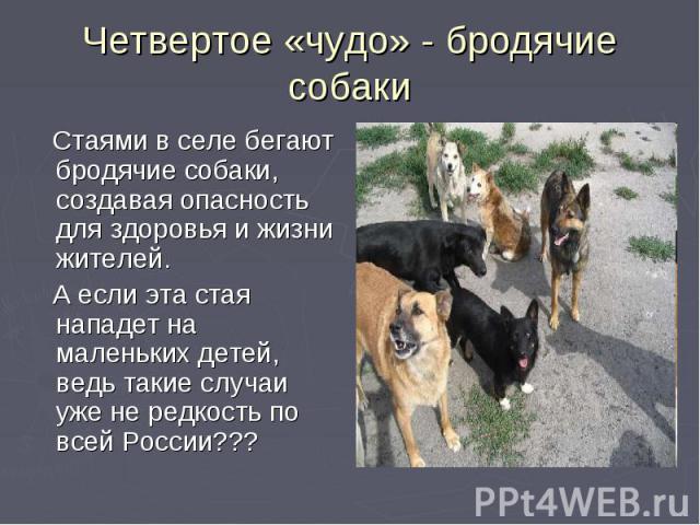 Четвертое «чудо» - бродячие собаки Стаями в селе бегают бродячие собаки, создавая опасность для здоровья и жизни жителей. А если эта стая нападет на маленьких детей, ведь такие случаи уже не редкость по всей России???