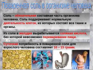 Поваренная соль в организме человека Соль – обязательная составная часть организ