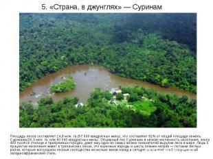 5. «Страна, в джунглях» — Суринам Площадь лесов составляет 14,8 млн. га (57 000
