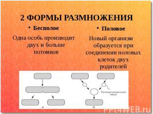 2 ФОРМЫ РАЗМНОЖЕНИЯ Бесполое Одна особь производит двух и больше потомков Полово
