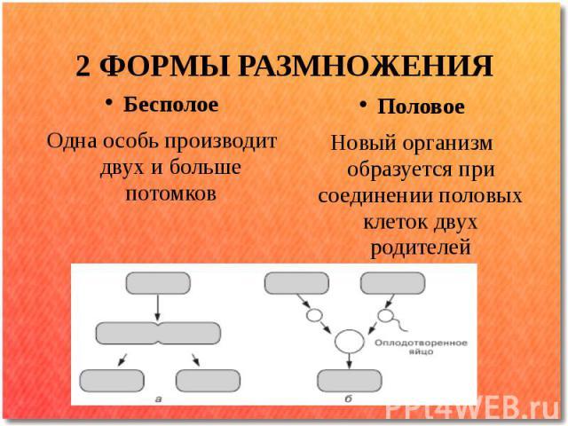 2 ФОРМЫ РАЗМНОЖЕНИЯ Бесполое Одна особь производит двух и больше потомков Половое Новый организм образуется при соединении половых клеток двух родителей