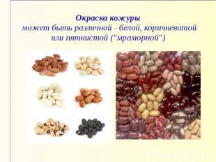 """Окраска кожуры может быть различной - белой, коричневатой или пятнистой (""""мрамор"""