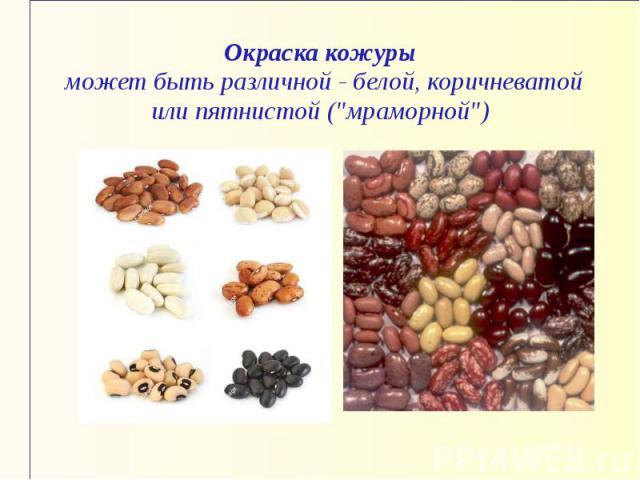 Окраска кожуры может быть различной - белой, коричневатой или пятнистой (
