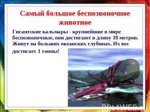 Самый большое беспозвоночное животное Гигантские кальмары - крупнейшие в мире бе