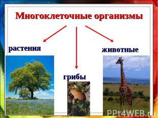 Многоклеточные организмырастения грибы животные