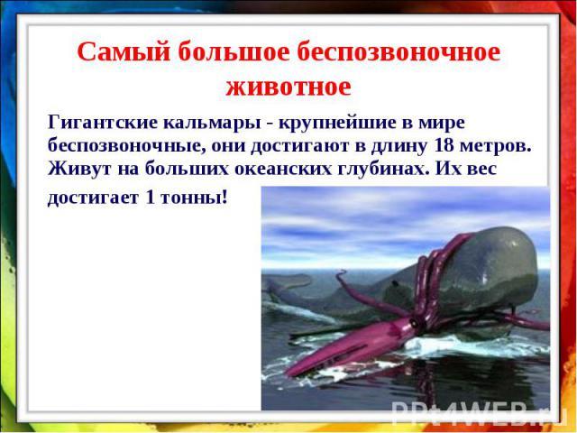 Самый большое беспозвоночное животное Гигантские кальмары - крупнейшие в мире беспозвоночные, они достигают в длину 18 метров. Живут на больших океанских глубинах. Их вес достигает 1 тонны!
