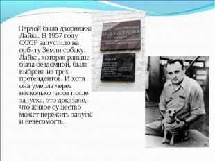 Первой была дворняжка Лайка. В 1957 году СССР запустило на орбиту Земли собаку.