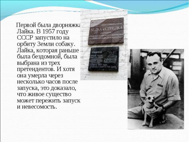 Первой была дворняжка Лайка. В 1957 году СССР запустило на орбиту Земли собаку. Лайка, которая раньше была бездомной, была выбрана из трех претендентов. И хотя она умерла через несколько часов после запуска, это доказало, что живое существо может пе…