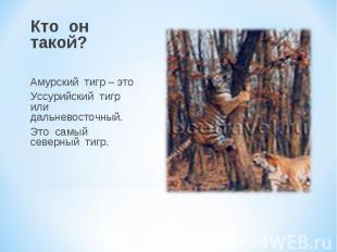 Кто он такой? Амурский тигр – это Уссурийский тигр или дальневосточный. Это самы