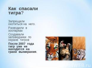 Как спасали тигра? Запрещали охотиться на него. Разводили в зоопарках Создавали