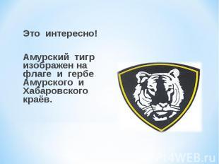 Это интересно! Амурский тигр изображен на флаге и гербе Амурского и Хабаровского