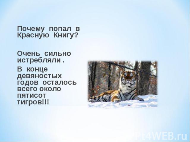Почему попал в Красную Книгу? Очень сильно истребляли . В конце девяностых годов осталось всего около пятисот тигров!!!