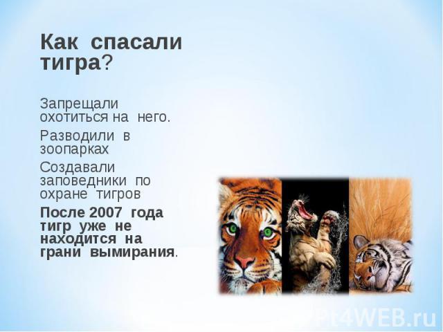 Как спасали тигра? Запрещали охотиться на него. Разводили в зоопарках Создавали заповедники по охране тигров После 2007 года тигр уже не находится на грани вымирания.