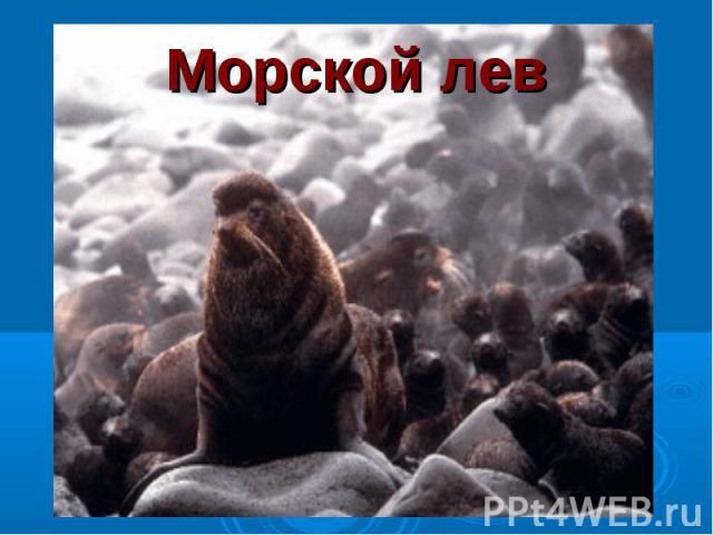 Морской лев