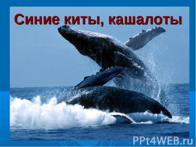 Синие киты, кашалоты