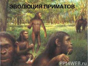 Эволюция приматов