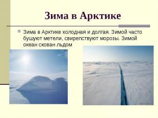Зима в Арктике Зима в Арктике холодная и долгая. Зимой часто бушуют метели, свир