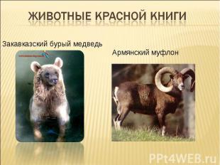 Животные Красной книгиЗакавказский бурый медведь Армянский муфлон