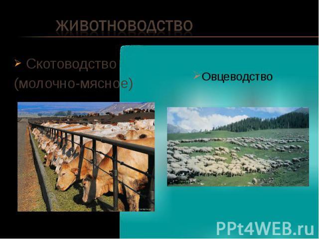 Животноводство Скотоводство (молочно-мясное) Овцеводство
