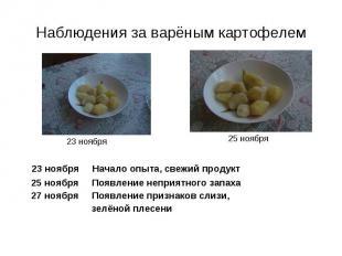 Наблюдения за варёным картофелем 23 ноября Начало опыта, свежий продукт 25 ноябр