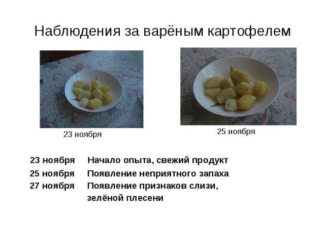 Наблюдения за варёным картофелем 23 ноября Начало опыта, свежий продукт 25 ноября Появление неприятного запаха 27 ноября Появление признаков слизи, зелёной плесени
