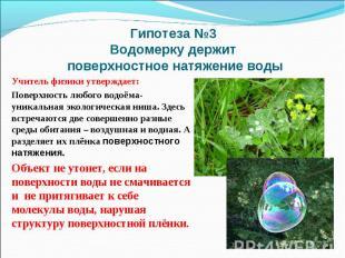 Гипотеза №3 Водомерку держит поверхностное натяжение водыУчитель физики утвержда