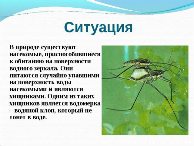 Ситуация В природе существуют насекомые, приспособившиеся к обитанию на поверхности водного зеркала. Они питаются случайно упавшими на поверхность воды насекомыми и являются хищниками. Одним из таких хищников является водомерка – водяной клоп, котор…