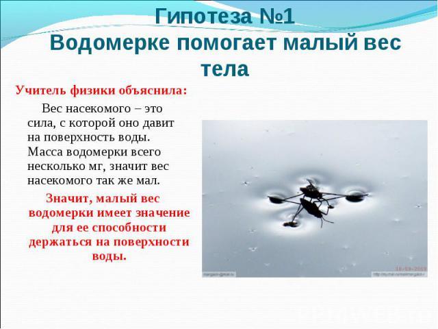 Гипотеза №1 Водомерке помогает малый вес телаУчитель физики объяснила: Вес насекомого – это сила, с которой оно давит на поверхность воды. Масса водомерки всего несколько мг, значит вес насекомого так же мал. Значит, малый вес водомерки имеет значен…