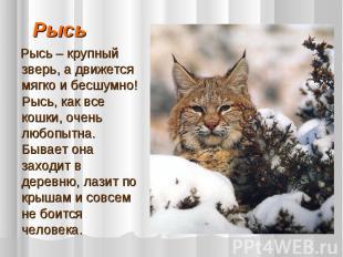 Рысь Рысь – крупный зверь, а движется мягко и бесшумно! Рысь, как все кошки, оче