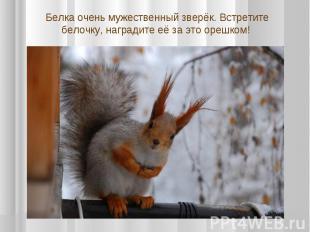 Белка очень мужественный зверёк. Встретите белочку, наградите её за это орешком!