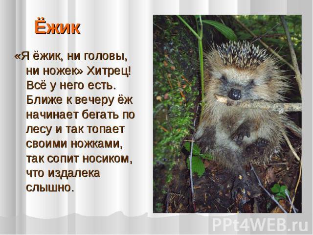 Ёжик «Я ёжик, ни головы, ни ножек» Хитрец! Всё у него есть. Ближе к вечеру ёж начинает бегать по лесу и так топает своими ножками, так сопит носиком, что издалека слышно.
