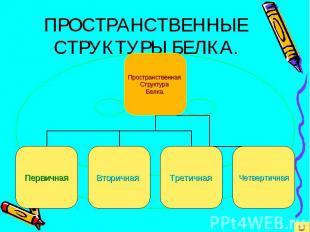 ПРОСТРАНСТВЕННЫЕ СТРУКТУРЫ БЕЛКА.