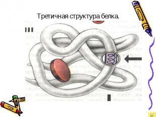 Третичная структура белка.