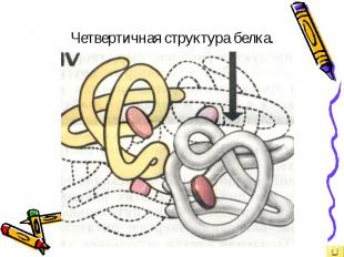 Четвертичная структура белка.